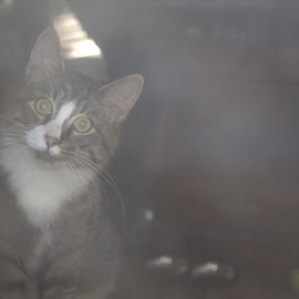 Through the window by Krista McMullen - Animals - Cats Kittens