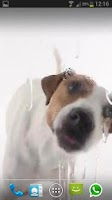 Screenshot of DOG LICKS SCREEN LWP FREE