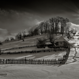 Life in black and white .... by Adrian Urbanek - Buildings & Architecture Homes ( winter landscape, mansion, black and white, proprietary, snow, trees, sun )