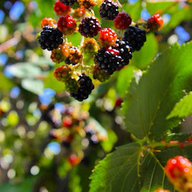 Last  Berries by Tonya Levy - Nature Up Close Gardens & Produce