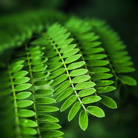 by Nairita Chatterjee - Nature Up Close Leaves & Grasses (  )
