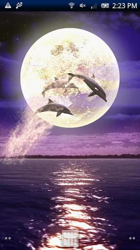 Dolphin-RYUKYU HEALING
