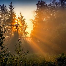 Morning Sun by Daniel Sandberg - Landscapes Sunsets & Sunrises ( morning glory, sunrays, sunrise, morning, shadows, sun )