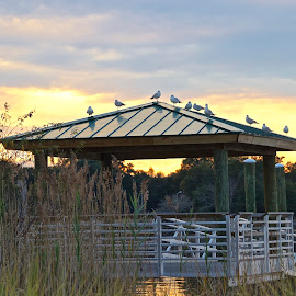 Georgetown, SC Marina by Jim Antonicello - City,  Street & Park  City Parks ( water, structure, sunset, marina, birds )