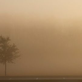 Alone in the Fog by Penny Deal - Landscapes Weather ( single, tree, fog, peace, weather, alone )