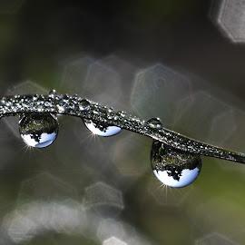 dew by Muhamad Lazim - Nature Up Close Water ( macro )