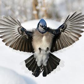 I have arrived by Isabelle VM - Animals Birds