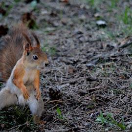 wazzap bro´s? by Terje Lepamets - Animals Other ( dancing, nature, tree, squirrel, animal )