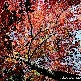 Fall Leaves by Cherise Booher - City,  Street & Park  City Parks