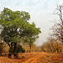 by Tamsin Carlisle - Landscapes Forests ( dry, season, jungle, trail, track, trees, india, maharashtra, road, bare )