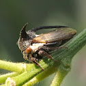 Cow Bug Treehopper