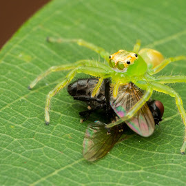 Breakfast by Goh Samuel - Animals Insects & Spiders ( greens, macro, raynox, morning, singapore )