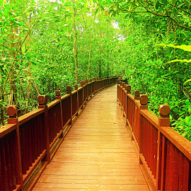 Path of happiness by Jaclyn Wong - Novices Only Flowers & Plants ( green, path, trees, bridge, walk,  )