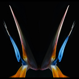 The Visitor by Michael Moriarty - Digital Art Things ( orange, orange flower, nature, blue, digital art, bird of paradise, flowers, floral )