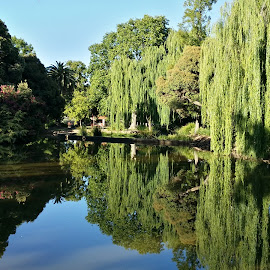 town park by Feona Green-Puttock - City,  Street & Park  City Parks ( water, reflection, park, waterscape, trees )