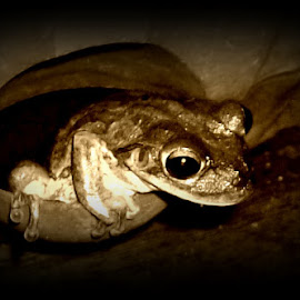 Frog  by Cindy Brown - Animals Amphibians (  )