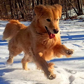 Leap for Joy! by Cecilia Sterling - Animals - Dogs Running ( , storm, stormy, weather )