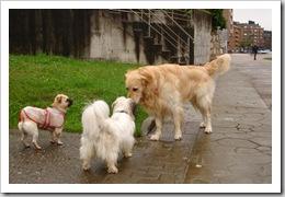 Otto y Lassie