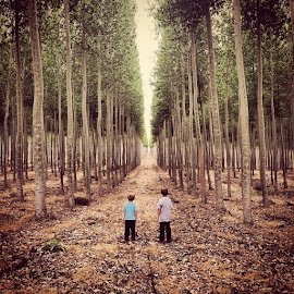 Surreal tree farm on the way back from vacation. Seems like a movie....waiting for ninjas to jump out of the trees. by Matt Hanson - Instagram & Mobile iPhone ( inspiring, beautiful, children, trees, perspective, kids, surreal )