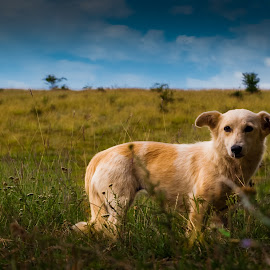 A dog on a hill by Iacobescu Adrian - Animals - Dogs Portraits ( clouds, hill, sky, grass, green, dog,  )