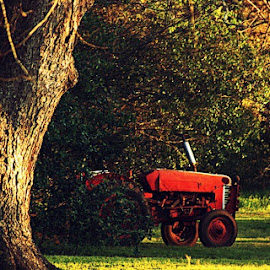 Lonely Tractor by Charlene Baltzell - Transportation Other ( old, autumn, georgia, tractor, country )
