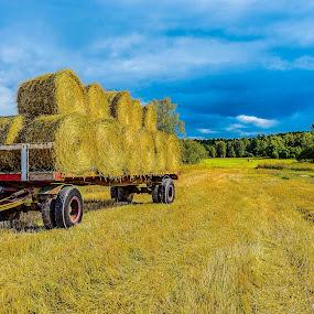 by Dan Westtorp - Landscapes Prairies, Meadows & Fields