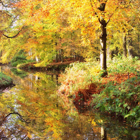 autumn by Sharon Verschelling - Landscapes Forests