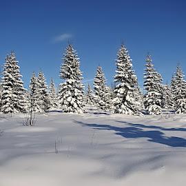 Filipova Huť by Miloš Stanko - Landscapes Weather ( les, sníh,  )