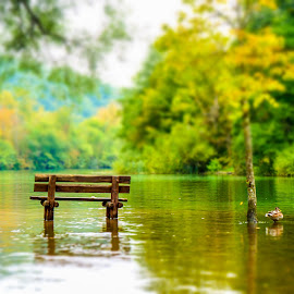 Waiting for somebody by Renato Alexandre - Landscapes Forests ( water, peaceful, bench, nature, trees, forest, croati, river )
