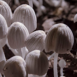 Mushrooms by Supriya Mukherjee - Nature Up Close Mushrooms & Fungi ( mushrooms )