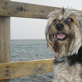 Rocco by Giovanna Pagliai - Animals - Dogs Portraits ( clouds, look, pure, nice., simpaty, sea, dog )