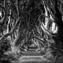 Dark Hedges by Chris PhotoShooter - Landscapes Travel ( b&w, black and white, trees, landscapes, landscape )