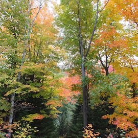 Fall Colours by Deb Hancock - Landscapes Forests