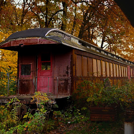 tain in fall by Jay Anderson - Transportation Trains ( train tracks, old, overgrown, colorful, railroad, dusk, woods, passenger, nature, color, autumn, train car, fall, train, trees, trip, rust, steam, abandoned )