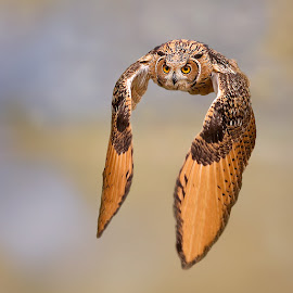 Look at me by Stefano Ronchi - Animals Birds