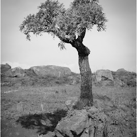 Lonely Bushveld tree by Dirk Luus - Landscapes Mountains & Hills ( hills, mountains, african, tree, bushveld, landscape, black and white, b&w )