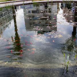 Reflections by Marina Klebanova - City,  Street & Park  Street Scenes ( netanya, reflections )