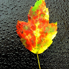 leaf on car with iPhone by Tyrell Heaton - Instagram & Mobile iPhone ( car, leaf, iphone5 )