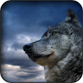 Wolf wallpapers APK for Bluestacks