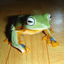 Green Flying-Frog