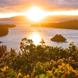 Dawn breaks... by Jp Bergeron - Nature Up Close Leaves & Grasses ( magic, tahoe, sunrise, morning, island )