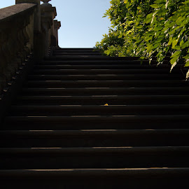 Stairway by Lorraine D.  Heaney - Buildings & Architecture Other Exteriors