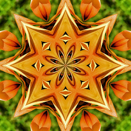 Mangled by Feona Green-Puttock - Digital Art Abstract ( creative, art, flowers, digital, orange. )