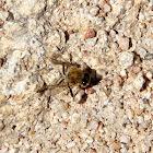 (Half) Bee