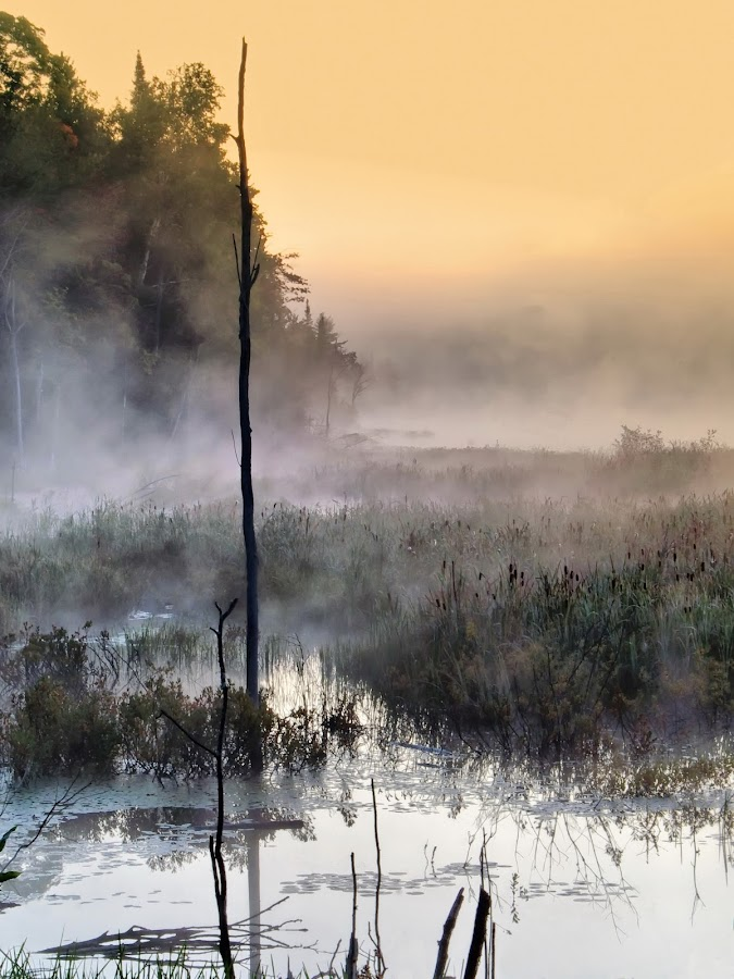 comes with mist by Andrzej Pradzynski - Landscapes Weather ( misterious, morning mist, marches, lakes, mood, atmospheric, misty, soft )