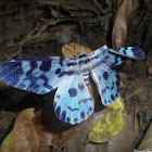 Blue day moth