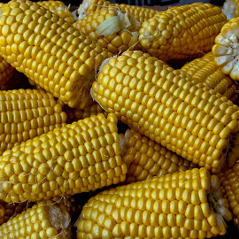 Corn by Robin Morgan - Food & Drink Fruits & Vegetables ( corn on the cob, yellow, corn )