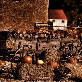 Halloween Wagon by Terry Ricks - Transportation Other ( pumpkin, hay, colorado, wagon, halloween )