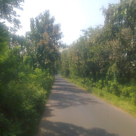 by Siddharth Srinivasan - Landscapes Travel ( green, empty, forest, road )
