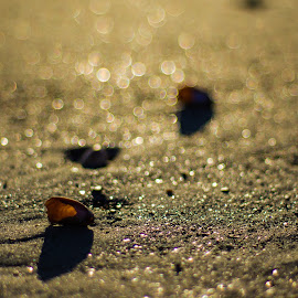 Beach Bokeh by Stuart Byles - Nature Up Close Sand ( sand, sea, pebbles, seashells, beach, landscape, sun )